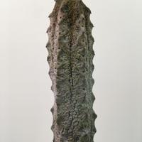Euphorbia abdelkuri ユーフォルビア アブデルクリ
