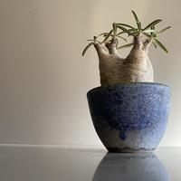 Gracilius  ×  Flat  pot 「Ibushi Gin」 - 笠間焼 - C82