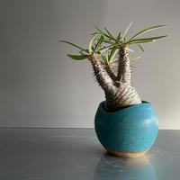 Gracilius  ×  Shell pot S「Turquoise blue」 - 笠間焼 - D12