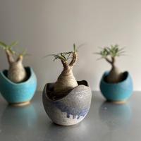 Gracilius × Shelly Pot「Ibushi Gin」 - 笠間焼  - C67