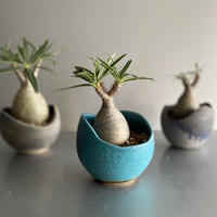 Gracilius  ×  Shelly pot 「Turquoise blue」 - 笠間焼 - C68