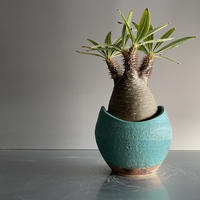 Gracilius  ×  Shell pot S「Turquoise blue」 - 笠間焼 - D13