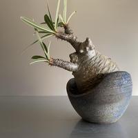 Gracilius  ×  Shelly  pot 「Ibushi Gin」 - 笠間焼 - C83