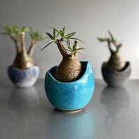Gracilius  ×  Shelly pot 「Turquoise blue」 - 笠間焼 - C51