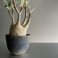 扁平 中ぶり Gracilius × Flat pot M「Ibushi Gin」- 笠間焼 - D01