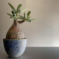 Gracilius  ×  Flat  pot 「Ibushi Gin」 - 笠間焼 - C86