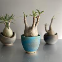 Gracilius  ×  Shelly pot 「Turquoise blue」 - 笠間焼 - C60