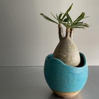 卵型  Gracilius  ×  Shell pot S「Turquoise blue」 - 笠間焼 - C92