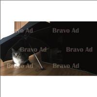 brav-01-00004