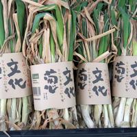 文化葱(干しネギ)ー文化農場オリジナル