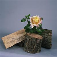 《Pink rose + logs 1》煙石紘子
