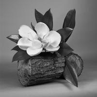 《Magnolia》煙石紘子