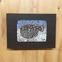 《Globefish》金丸悠児