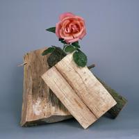 《Pink rose + logs 2》煙石紘子