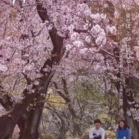 『デッドエンドの思い出』DVD、韓国版ポストカードセット