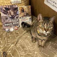 Cat's Meow Books 3点セット