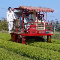 2019年産 オーガニック粉末緑茶   Organic Powder Green Tea