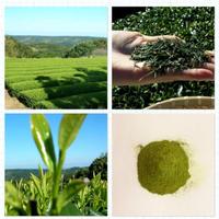 2021年産 オーガニック粉末緑茶   Organic Powdered Green Tea