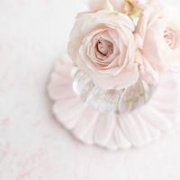 45サイズ:花びら舞う桜色 SAKURA PINK