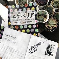 書籍 多肉植物エケベリア GUIDE  TO  ECHEVERIA  改訂版 (サイン入り)