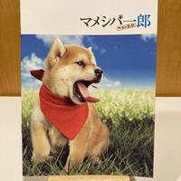 「マメシバ一郎 フーテンの芝二郎」パンフレット