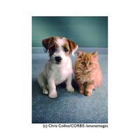 まとめ買いで【20%OFF】お得な『5枚』セット!!!      ポストカード【Portrait of puppy and kitten】
