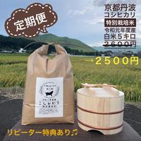 定期便 白米 5キロ 京都丹波コシヒカリ 令和元年度産 特別栽培米