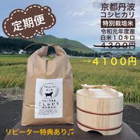 定期便 白米 10キロ 京都丹波コシヒカリ 令和元年度産 特別栽培米
