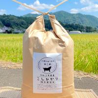 玄米 5キロ 京都丹波コシヒカリ 令和2年度産 特別栽培米