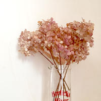 Dried flower's* / Autumn color assort  *B