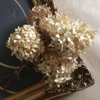 Dried flower's* ノリウツギ /  S*size assort
