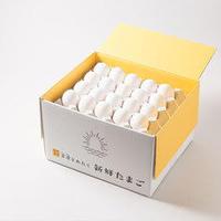 【定期便】朝日(白たまご)55個 + 5個保証(計60個)