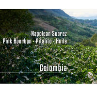 Colombia - Napolean Suarez - Pink Bourbon Pitalito   100g