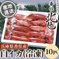 [送料込]白イカ(冷凍) 10匹【香住北よし】