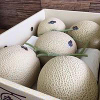 静岡マスクメロン大玉5個入 夏限定商品
