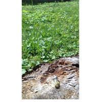オランダ・デンハーグの白鳥の棲む森にてフルチャージ☆Angel in the forest(グリーンアパタイト)