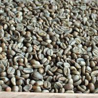 (生豆)コスタリカ ブルンカ地方チリポ山付近 リベンス ゲイシャ フルハニー 2020 1kg