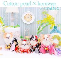 Cotton pearl × Koniwan コラボ撮影会