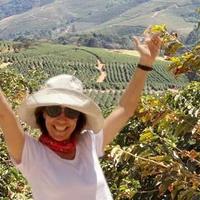 ブラジル モジアナ地区/サンタ アリーナ農園/サンパウロ州/マイクロロット/ポソスデカルダス山脈