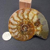 「アンモナイト化石・アガタイズドアンモナイト(メノウ化アンモナイト)・(04)」特徴的な隔壁の様子がよくわかるカット標本