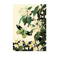 B4サイズポスター ビクトリアトリバネアゲハとプルメリア