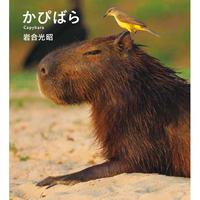 【岩合光昭】IWAGO'S BOOK ⑤『かぴばら』