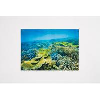 【中村征夫】ポストカード サンゴの平原