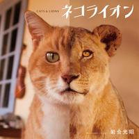 【岩合光昭】写真集『ネコライオン』