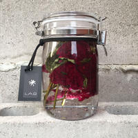 Lab bottle plants 1ℓ (celosia cristata)