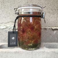 Lab bottle plants 1ℓ (serruria)