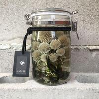 Lab bottle plants 1ℓ (echinopus green)