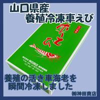 神田商店 山口県産 養殖 冷凍 車えび  500g (20匹前後)