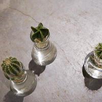 水耕 サボテン 3種類 観葉植物 インテリア 新生活 ギフト