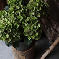 舞姫 アジサイ 鉢カバーセット 観葉植物 グリーン お洒落 インテリア ナチュラル 新生活 ギフト